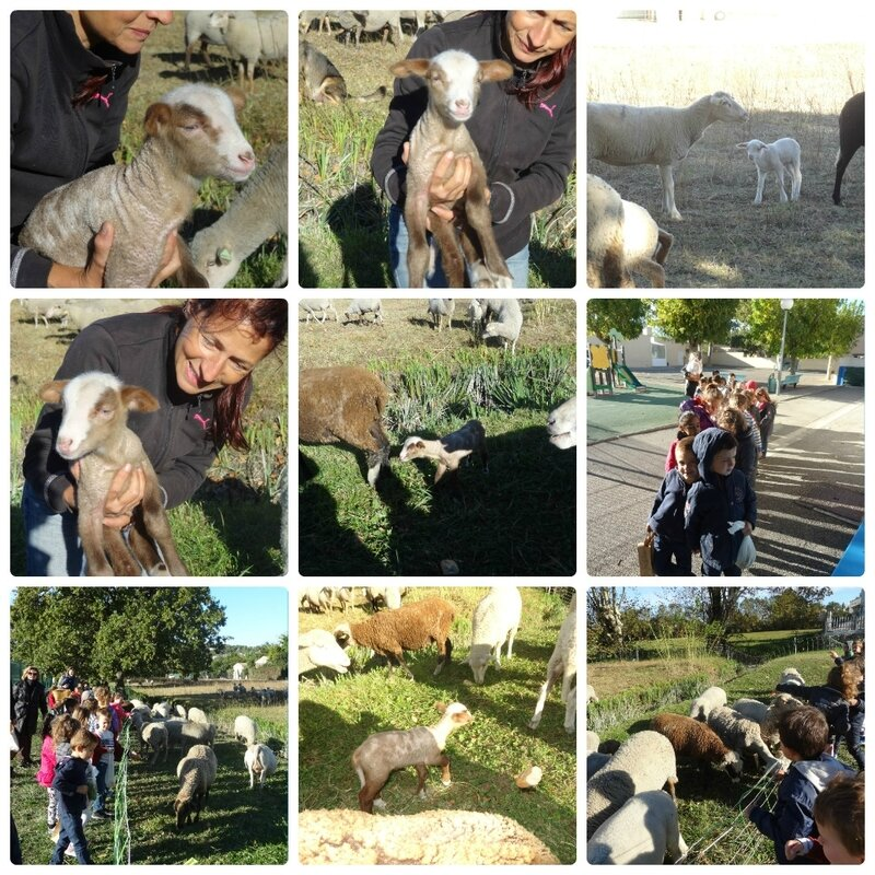 collage_moutons1