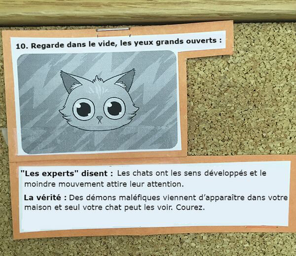 affiches-comportements-chats-10
