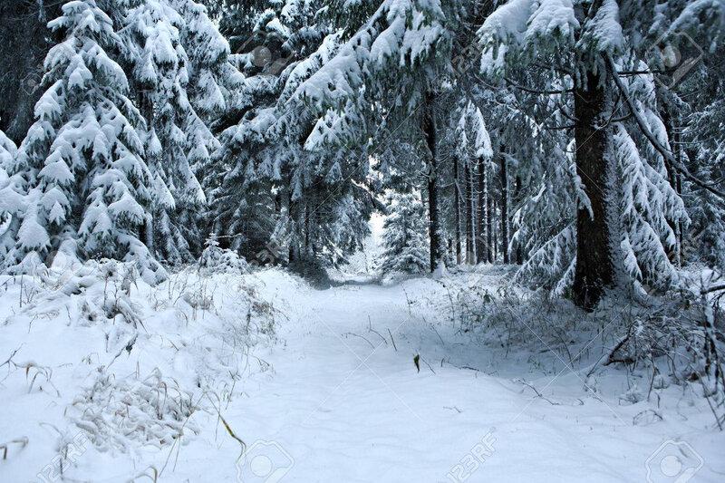 24162718-la-forêt-d-hiver-sous-la-neige-fraîche-dans-masserberg-thuringe-allemagne-