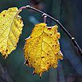 Avant la pluie, images d'automne en savoie