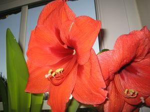 fleurs011