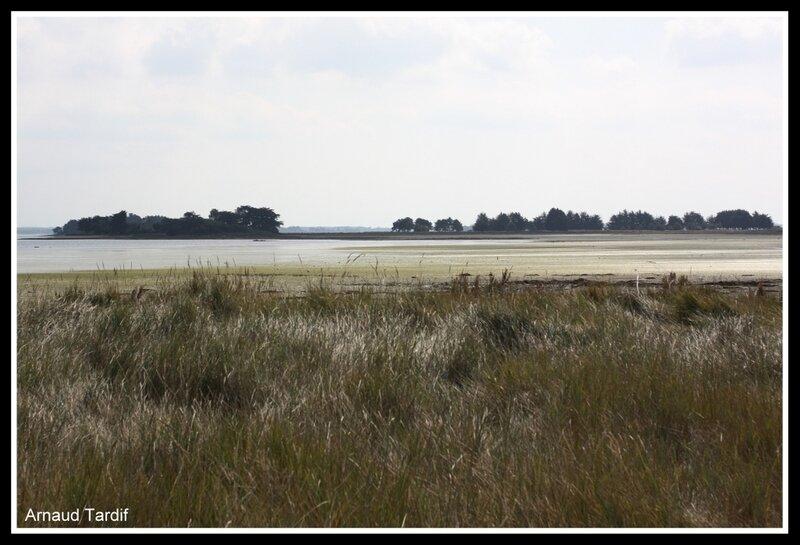 001192 Larmor-Baden - Le Golfe du Morbihan - L'Ile d'Arz - De la Pointe de Béluré à la Plage de Rudevent