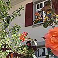 L'été de la pandémie - nuit 7/7 - roses dans la belle lumière du soir