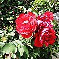 1-Fleurs de Léon 230617