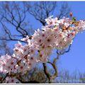 Vive le printemps sous le soleil...