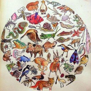Mandala animalier à colorier