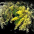 Helene ou le regne vegetal...extrait