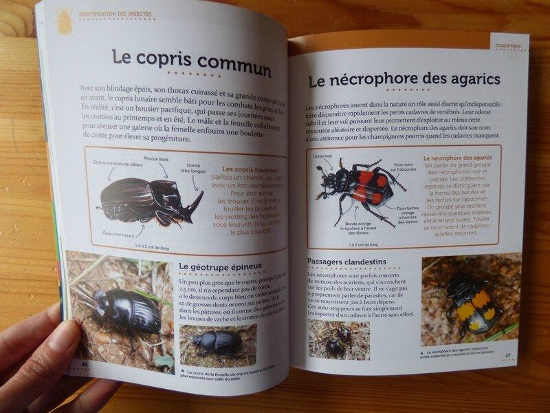 Le petit guide entomo (1)