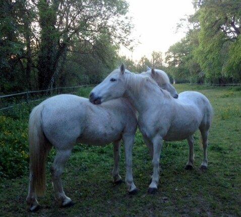 chevaux mai 2016