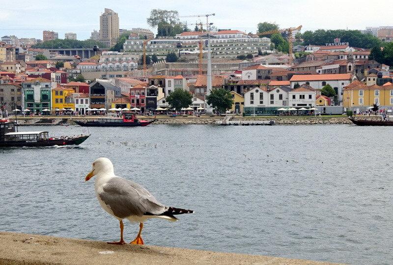 Porto goéland