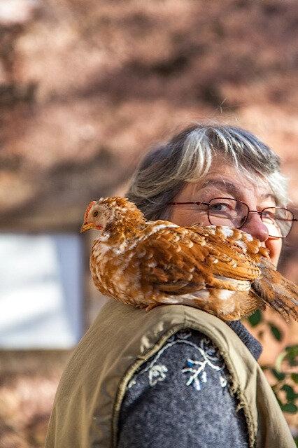poulet 3