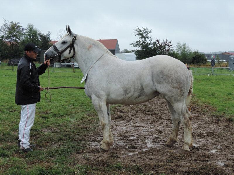 Gitane du Pré - 27 Juillet 2019 - National Boulonnais - Samer (62) - 5e (3 ans)
