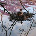 Jeu d'eau autour du nid