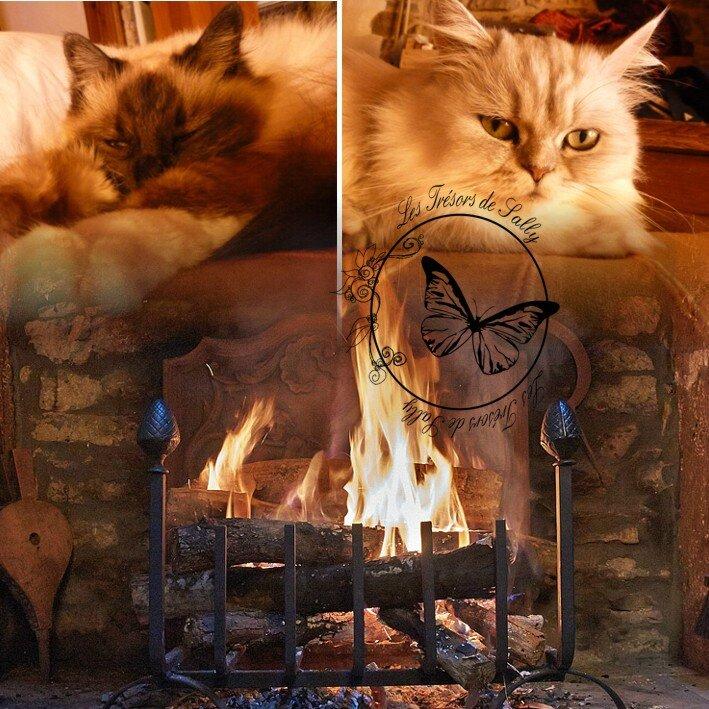La chatte aux tresors part 1 4k remastered - 2 part 5