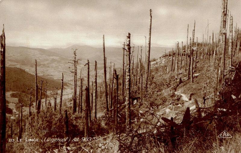 le Linge, Lingekopf, bois dévastés