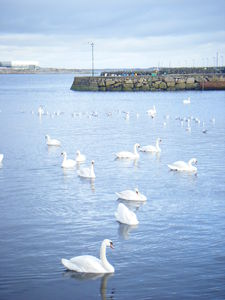 Galway_066