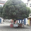 Vendeur de noix de coco a Sao Luis