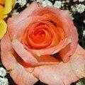 La Flore -