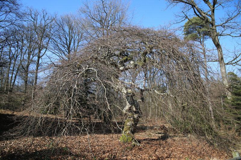 9N3A7780 forêt de Verzy