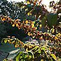 L' automne arrive dans le jardin .....