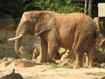 elephants__6_