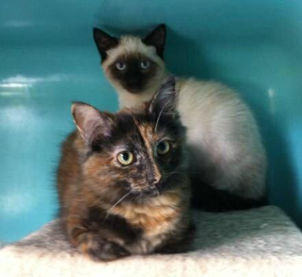 Domi 4 août 2014 2 chatons
