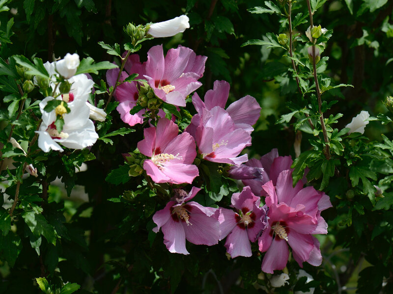 Bouquet Altéa rose