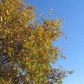 automne059