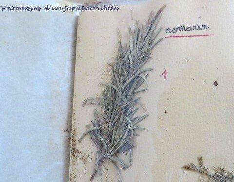 8 herbier