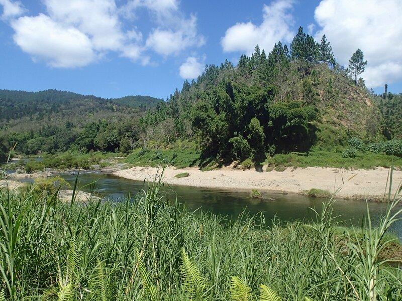 photo 2- B vulgaris dans le nord de la Nouvelle-Caledonie