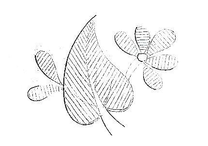 Image107 (1)