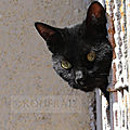 Photos JMP©Koufra 12 - Le Caylar - Chat - Chat noir - 10072019 - 0008