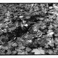 NB feuilles mortes et reflets dans l'eau
