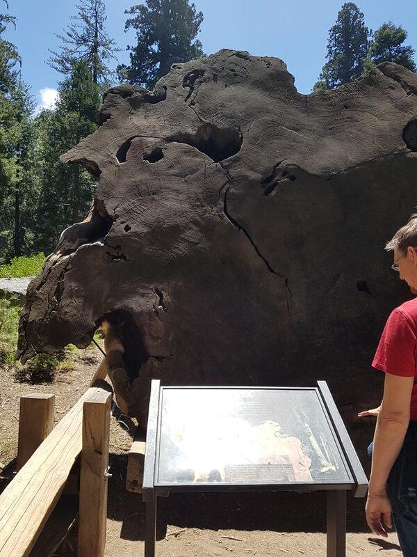 1108 sequoia5