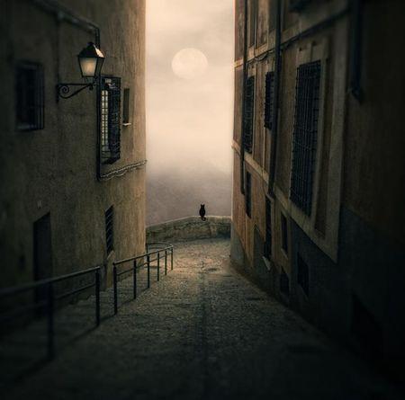 chat___la_lune