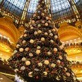 sapin grand magasin