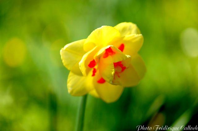 roseraie_printemps_2010_034b