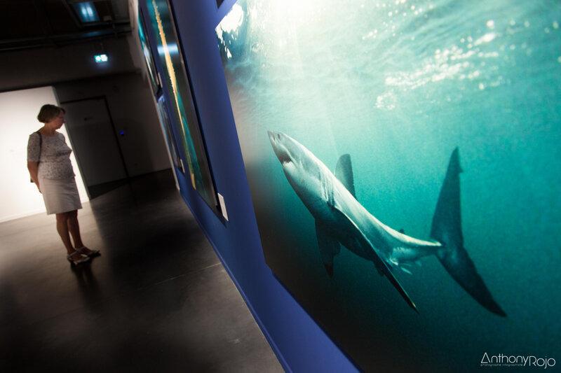 18 Musée mer marine Bordeaux Fradin Anthony Rojo-38