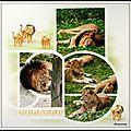 Pairi daiza 2014 - lions