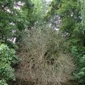 drzewa (2)