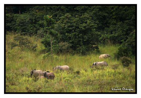 Elephant_groupe_2_3_copy