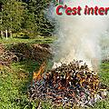 Il est interdit de brûler des déchets verts dans son jardin.