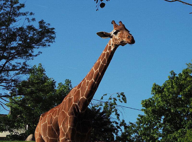 zoo-beauval-animaux-rhinoceros-30