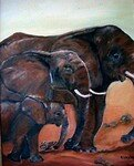 98_elephants_175___2005_copie