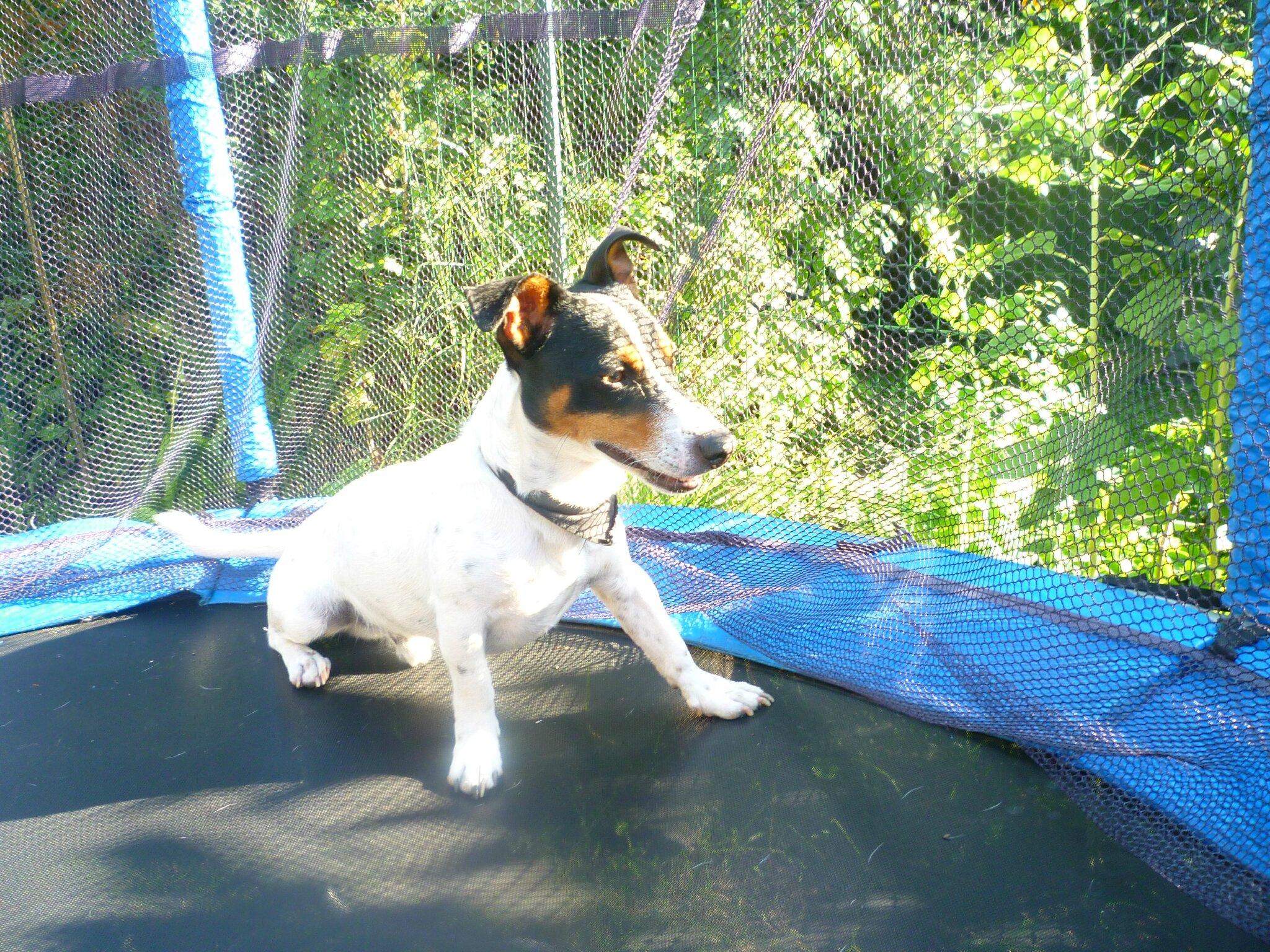 CATHY T famille d'accueil à MARCQ EN BAROEUL garde votre chien (dog sitter)