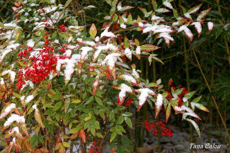jardin_sous_la_neige_TC