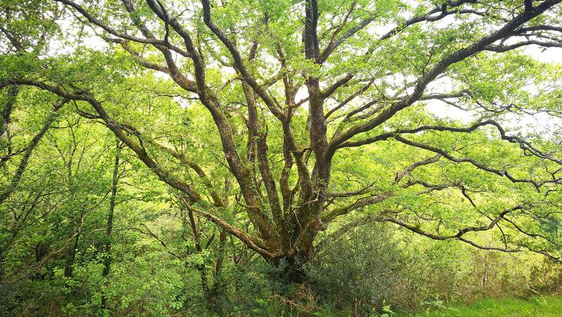 Amotz, des arbres