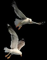 MR_Shorebirds
