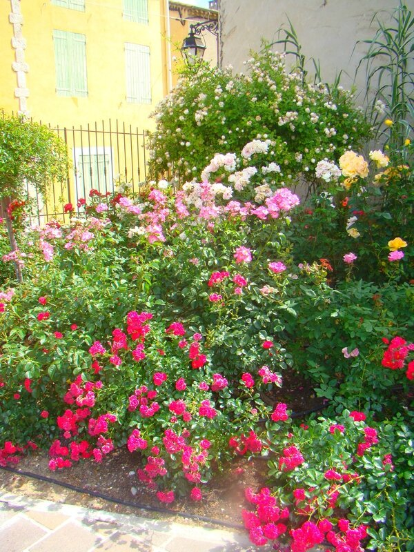 roses_greoux1