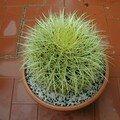Echinocactus, echinocereus, echinopsis......